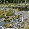 parc national de la Terre de Feu, barrage de castors