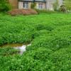 champs de cresson, Veules-les-Roses